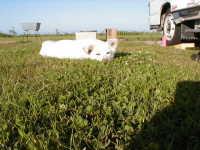 サイトは芝で気持ち良い