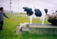 牛と勘違い