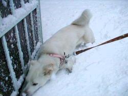 大雪に満足