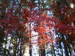紅葉の那須