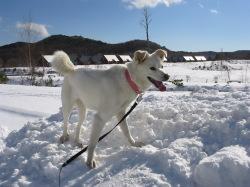 雪に大満足