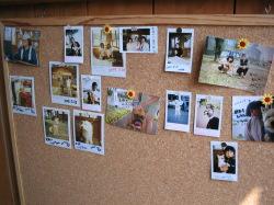 訪問した犬たちの写真