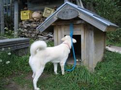 アキナの犬小屋