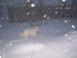 夜にはすごい雪