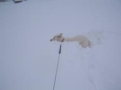 雪の中を疾走