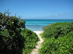 小道の先に白い砂浜と青い海
